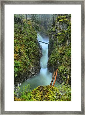 Vancouver Island Rainforest Falls Framed Print by Adam Jewell