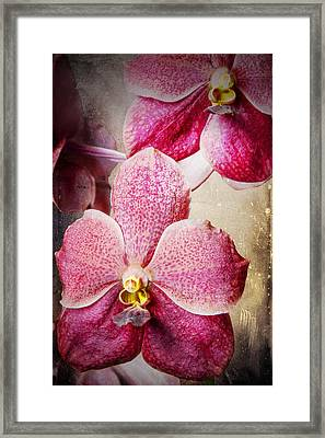 Vanda Orchid 3036a Framed Print by Rudy Umans