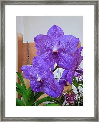 Vanda Orchid Framed Print