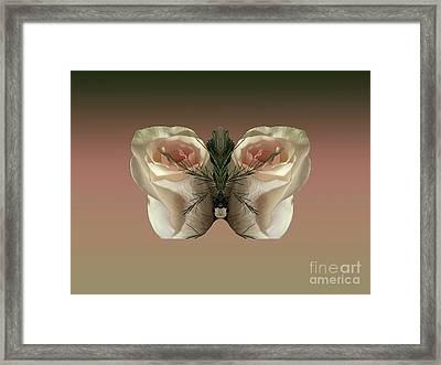 Vanilla Butterfly Rose Framed Print