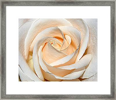 Vanilla Cream Framed Print by Diane E Berry