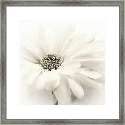 Framed Print featuring the photograph Vanilla Ice by Darlene Kwiatkowski