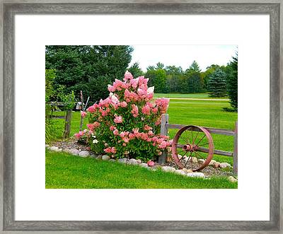 Vanilla Strawberry Hydrangea Framed Print