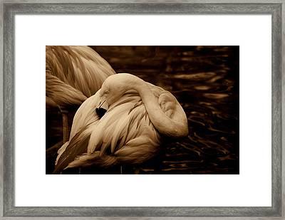 Vanity II Framed Print by Susanne Van Hulst