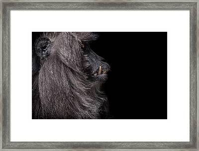 Vanity Framed Print