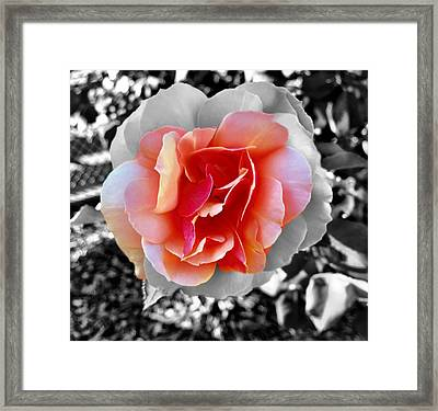 Variation Framed Print