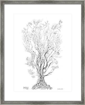 Variation On A Cayley Tree Framed Print by Regina Valluzzi