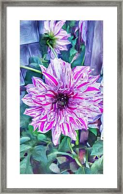 Variegated Dahlia In Oil Framed Print