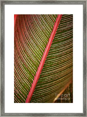 Variegated Ti-leaf 2 Framed Print by Ron Dahlquist - Printscapes