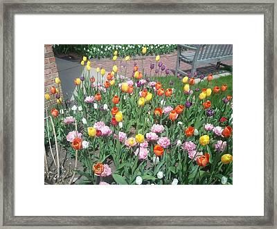 Variety Of Color Framed Print