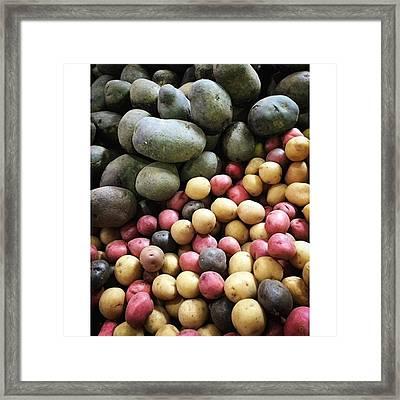 Variety Of Organic Potatoes At The Framed Print