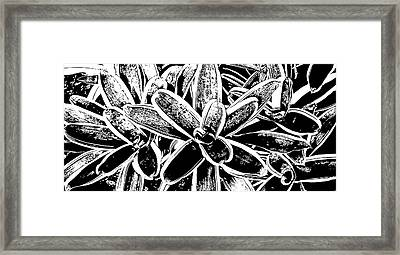 Variegated Vase Plant No. 2-3 Framed Print