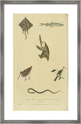 Various Birds Fish Framed Print by MotionAge Designs