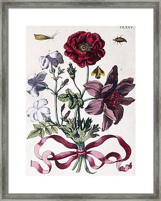 Various European Insects And Flowers Framed Print by Maria Sibylla Graff Merian