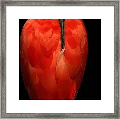 Vase-shaped Bird Framed Print by Emanuel Tanjala