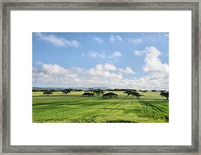 Vegetation Framed Print