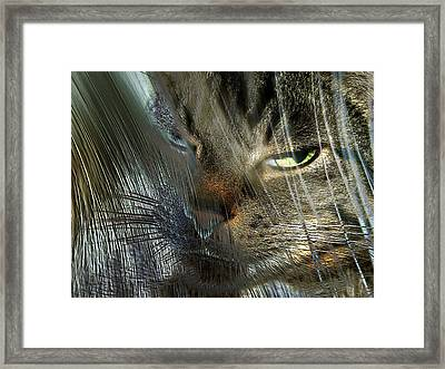 Framed Print featuring the photograph Veiled Insolennce by Irma BACKELANT GALLERIES