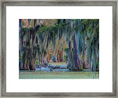 Unveiling The Secrets Of Da Swamp At Cypress Island Preserve Framed Print by Kimo Fernandez