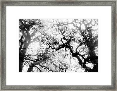 Veiled Tones Of Winter Framed Print by Tim Gainey