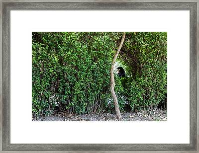 Veiled Woman In The Green Framed Print