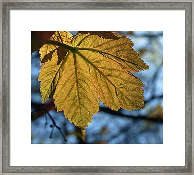 Veinage Framed Print