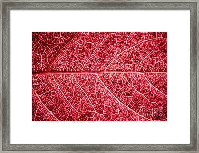 Veins In A Red Autumn Leaf Framed Print by Ryan Kelly