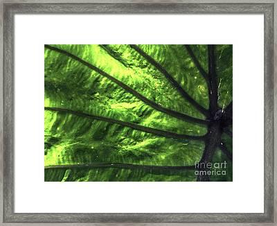 Veins Of An Elephant Leaf Framed Print