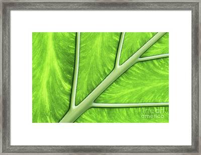 Veins Of Life #2 Framed Print