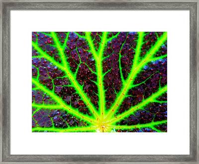 Veins On A Leaf Framed Print