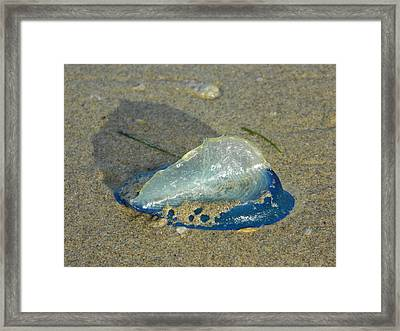 Velella With Shadow Framed Print by Gallery Of Hope