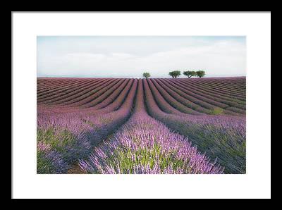Flower Photographs Framed Prints