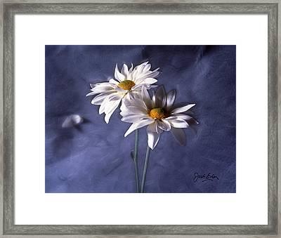 Velvet Daisies Framed Print by Jack Eadon