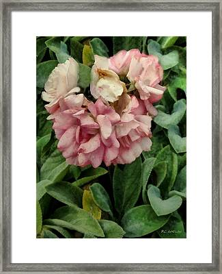 Velvet In Pink And Green Framed Print by RC deWinter