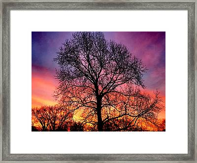 Velvet Mood Framed Print