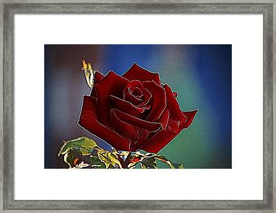 Velvet Rose Framed Print by Alexey Bazhan