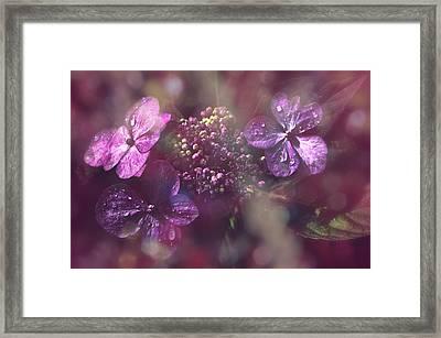 Velvet Touch Framed Print by Nicole Frischlich