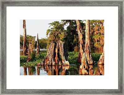 Framed Print featuring the photograph Venerable by Nicholas Blackwell