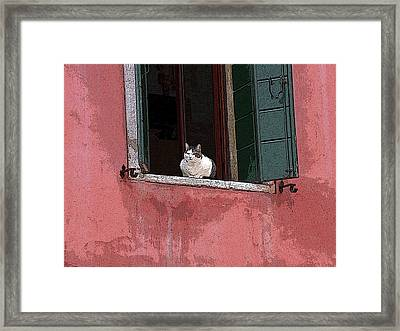 Venetian Cat In Window Framed Print