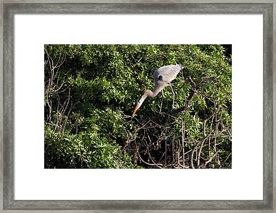Venice Heron Framed Print by David Yunker