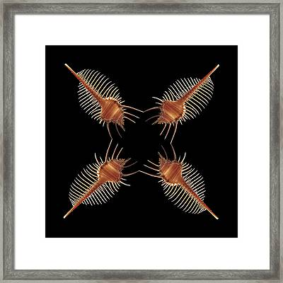 Venus Comb Geometric Framed Print by Gary Cloud