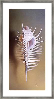 Venus Comb Murex Shell Framed Print
