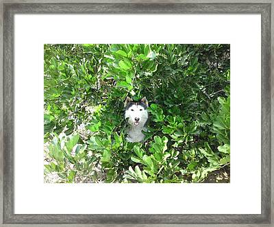 Vera In The Carrotwood Branches Framed Print by Lynda Dawson-Youngclaus