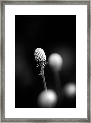 Veritable Wonderland Framed Print