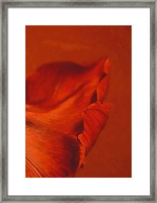 Vermilion Framed Print by Odd Jeppesen