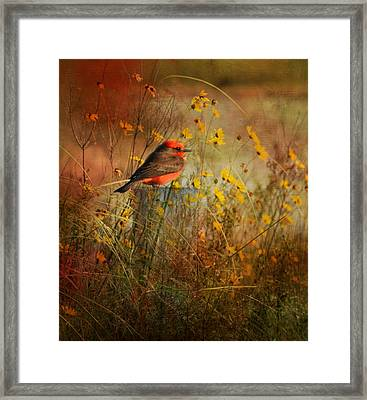 Vermilion Flycatcher At St. Marks Framed Print