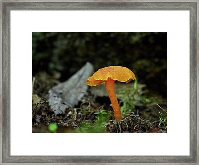 Vermillion Waxcap Framed Print