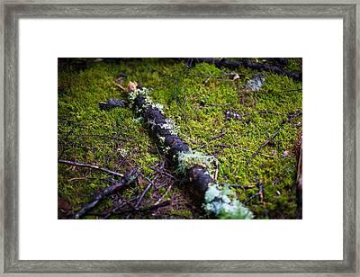 Vermont Forest. Framed Print by Robert Davis