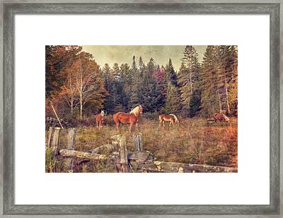 Vermont Horse Farm In Autumn Framed Print