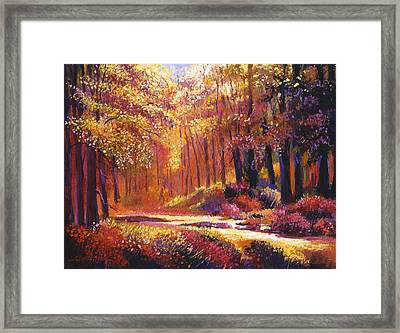 Vermont Paintbox Forest Framed Print by David Lloyd Glover