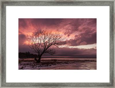 Vermont-sunset-silhouette-lake Champlain-tree Framed Print by Andy Gimino